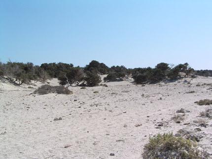 Κεδρόδασος και αμμόλοφοι