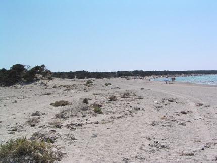 Η παραλία και το κεδρόδασος