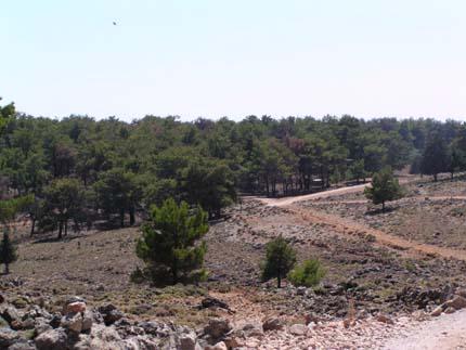Το πευκοδάσος στην περιοχή του Άγιου Ιωάννη στα Σφακιά