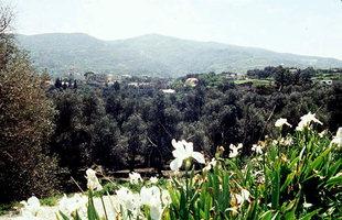 Town of Kandanos