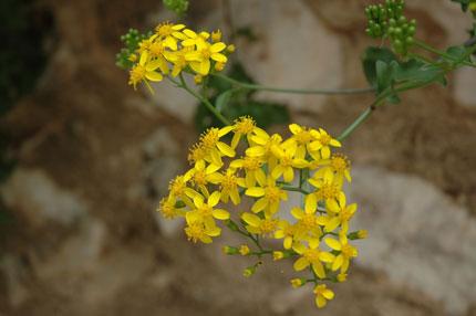Flora in Crete