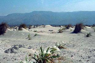Isola di Elafonisi