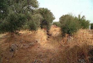 Tombe Minoenne à tholos à Stylos