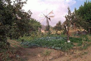 A windmill in Lassithi Plateau