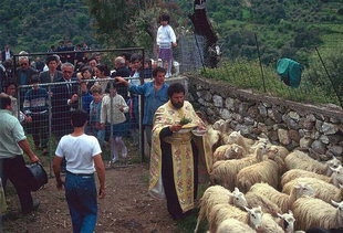 The priest blesses the animals, the milk, and the shepherds in the celebration, Asigonia