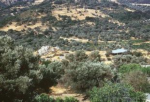 Die minoische Stätte (unter einem Schutzdach) von Monastiraki
