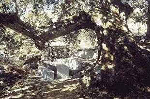 The sitting area in the shade of the large tree in Kaloidena Monastery