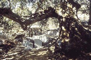 Il posto ideale per sedersi all'ombra del grande albero nel Monastero di Kaloìdena