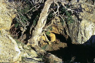 The mouth of the Eilithia Cave